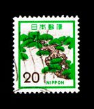 Japanese pine tree, Fauna, Flora and Cultural Heritage serie, circa 1972. MOSCOW, RUSSIA - SEPTEMBER 3, 2017: A stamp printed in Japan shows Japanese pine tree Royalty Free Stock Photos