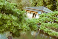 Japanese Pine tree with old traditional Japanese tea house in the background located in Hamarikyu Gardens, Tokyo, Japan Stock Photography