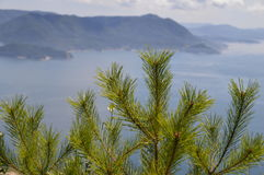 Japanese Pinetree With Beautiful Scene On The Backgroud. At The Backgrou,d is the sea and mountains Stock Photography