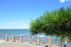 Japanese Pinetree With The Sea Around Ise As A Background.  Royalty Free Stock Photo
