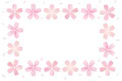 Japanese cherry blossom frame abstract on white background Royalty Free Stock Photography