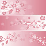 Japanese pink sakura banners Royalty Free Stock Images