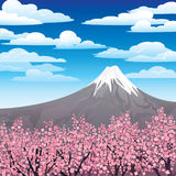 Japanese pink trees and volcano Royalty Free Stock Photo