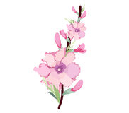Japanese plum blossom watercolor Royalty Free Stock Images