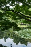 Japanese pond Royalty Free Stock Images