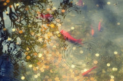 Japanese pond with coins Stock Image