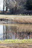 Japanese pond and dry pampas grasses Stock Images