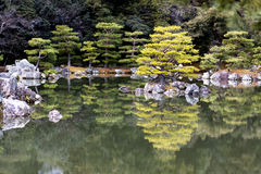 Japanese pruned pine trees reflection Stock Photos