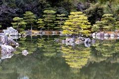 Japanese pruned pine trees reflection Stock Photos