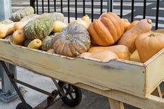 Japanese pumpkin, Golden nugget, butternut, winter squash variet Royalty Free Stock Image