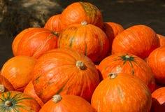 Japanese pumpkins Royalty Free Stock Photo