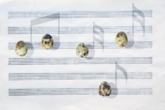 Japanese quail eggs. Six-stave music paper. Shadows like musical notes. stock photo