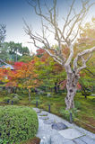 Japanese red maple tree during autumn in garden at Enkoji temple in Kyoto, Japan Stock Photo
