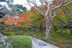 Japanese red maple tree during autumn in garden at Enkoji temple in Kyoto, Japan Stock Photos
