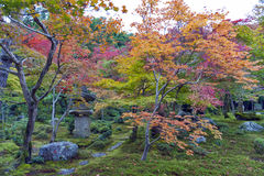 Japanese red maple tree during autumn in garden at Enkoji temple in Kyoto, Japan Royalty Free Stock Photos