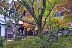 Japanese red maple tree during autumn in garden at Enkoji temple Stock Photo