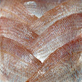 Japanese red sea bream fillets Royalty Free Stock Image