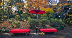 Japanese red umbrella at the city park royalty free stock photo