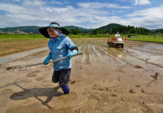 Japanese rice farmers planting a rice paddy royalty free stock photo