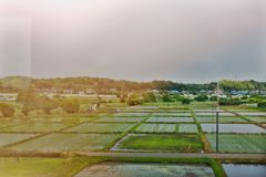 Japanese rice field stock images