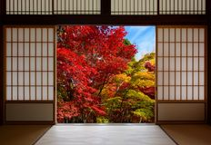Japanese rice paper wood doors opened to an autumn forest with red and yellow fall colors stock images