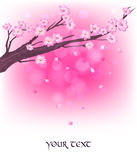 Japanese sakura Royalty Free Stock Photo