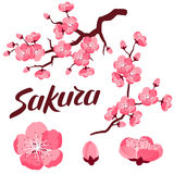 Japanese sakura set of branches and stylized flowers. Objects for decoration, design on advertising booklets, banners Royalty Free Stock Photo