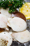 Japanese scallop Royalty Free Stock Photography