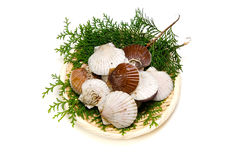Japanese scallop Royalty Free Stock Images