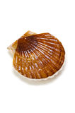 Japanese scallop Royalty Free Stock Photos
