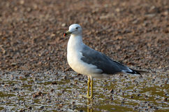 Japanese sea, seagull on the shore Royalty Free Stock Image