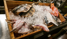 Japanese seafood in a crate of ice in a restaurant. A display of Japanese fresh seafood selection packed in a crate of ice, ready to be used for cooking. This Royalty Free Stock Photos