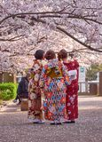 Japanese selfies by ladies. Kyoto, Japan, March 29, 2018. Three japanese woman wearing colorful flower motif kimonos taking selfie under a cherry tree during stock image