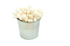 Japanese Shimeji mushroom in pot Royalty Free Stock Photography
