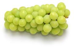 Japanese shine muscat grape Stock Images