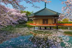 Free Japanese Shinto Temple At Spring Royalty Free Stock Photography - 114863377