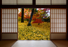 Japanese sliding wood doors open to an autumn sight of fallen yellow ginkgo leaves Stock Images