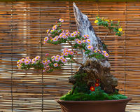 Japanese small bonsai tree Stock Image