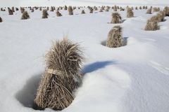 Japanese snow field Stock Photo