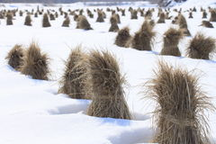 Japanese snow field Stock Photos