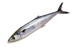 Japanese spanish mackerel Royalty Free Stock Photos