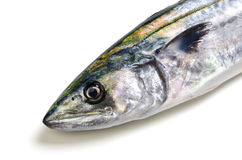Japanese spanish mackerel Royalty Free Stock Photos
