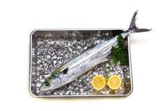 Japanese spanish mackerel Royalty Free Stock Photography