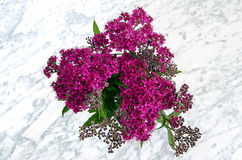 Japanese spirea in black vase Stock Images