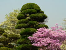 Japanese spring. Japanese garden in spring Royalty Free Stock Image