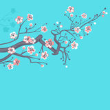 Japanese spring, cherry blossoms. Stock Images