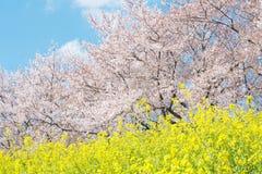 Japanese spring scenics Stock Image