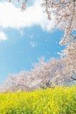 Japanese spring scenics Royalty Free Stock Image