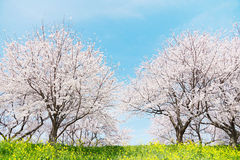 Japanese spring scenics Stock Images