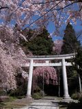 Japanese spring view Royalty Free Stock Image